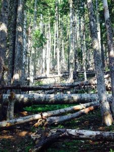 badger creek 9